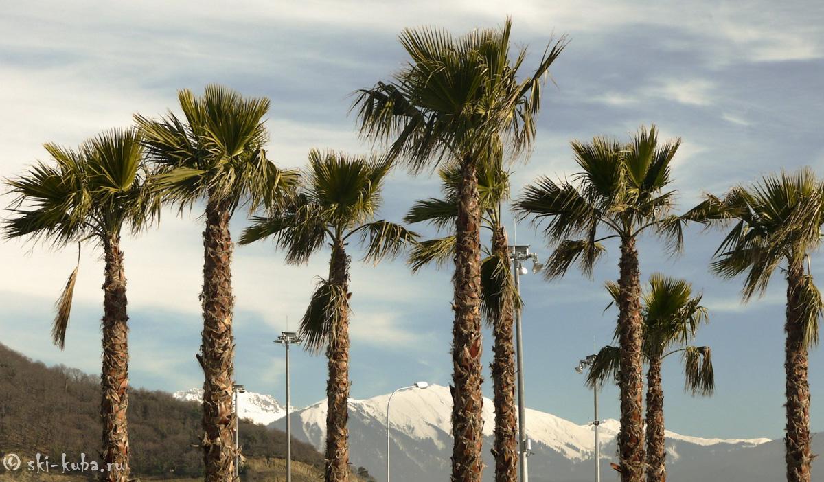 Сочи снег и пальмы