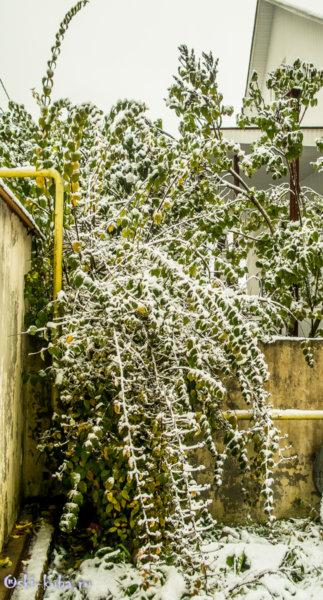 1.11.2017.Первый снег в Красной Поляне-0720-2